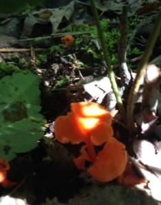 neon mushrooms