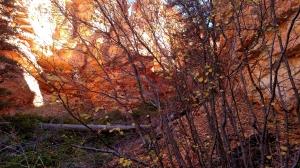 Bryce Autumn